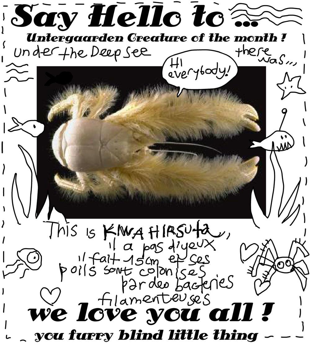 Kiwa Hirsuta, un petit homard poilu adorable